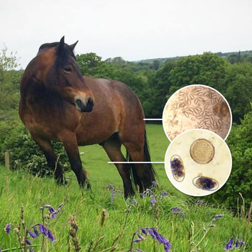 Image of Horse Worm Count Kit & Pinworm Test