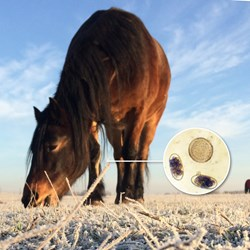 Image of Winter Reduction test after wormer