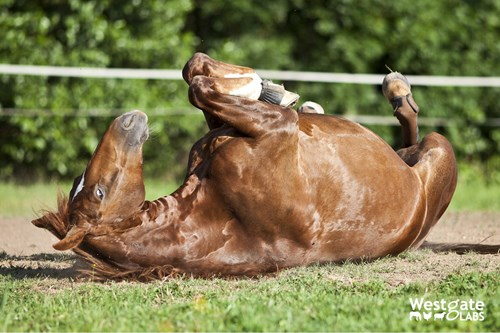 Protect your horse from colic