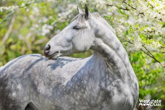 Our guide to Spring Parasite Control for horses 2020